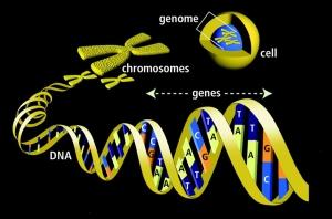 DNA-genes